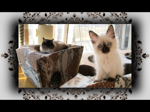 katzenspielzeug selbst gemacht archives der katzenfutter ratgeber. Black Bedroom Furniture Sets. Home Design Ideas